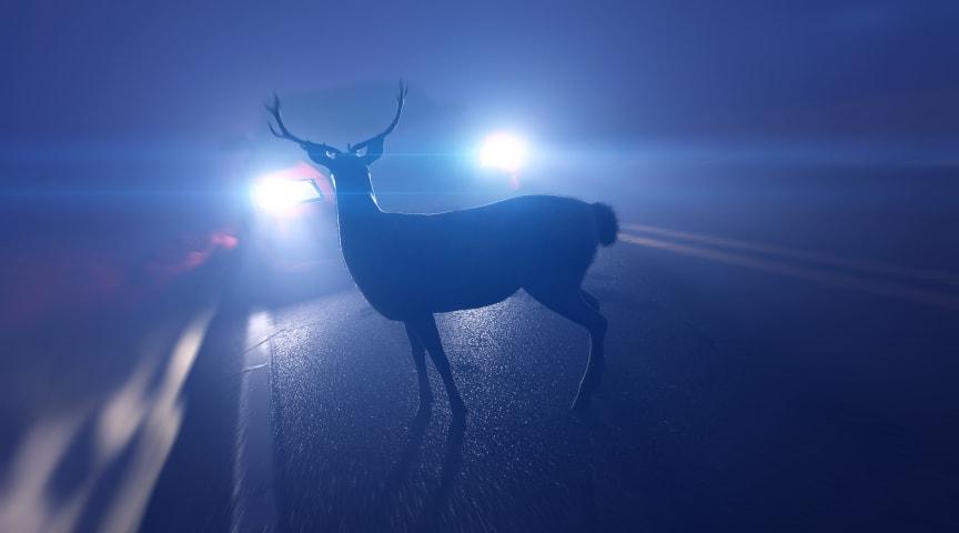 Med extraljus ser du djur på vägen i tid