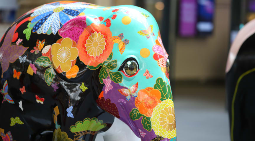 How a little elephant inspired so many big stories...