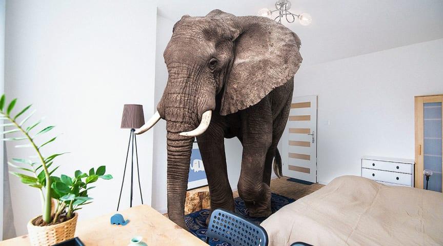 """Det finns ett uttryck som handlar om """"Elefanten i rummet"""". Enligt Wikipedia är """"Elefanten i rummet"""" ett bildligt uttryck för något som är påtagligt för alla människor i en grupp, men som man undviker att prata om. Foto: © [Daniel] / Adobe Stock"""