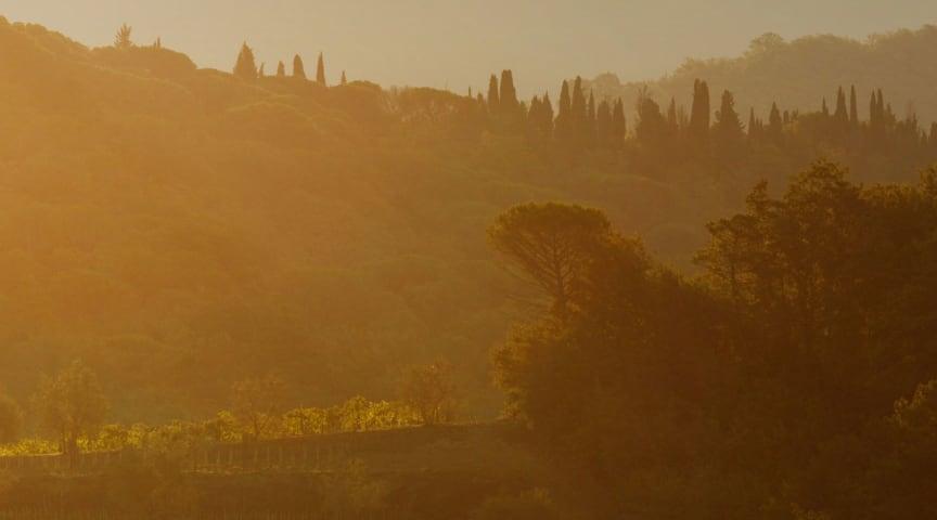Följ med på en resa genom tre vackra vinregioner där druvan Sangiovese är kung
