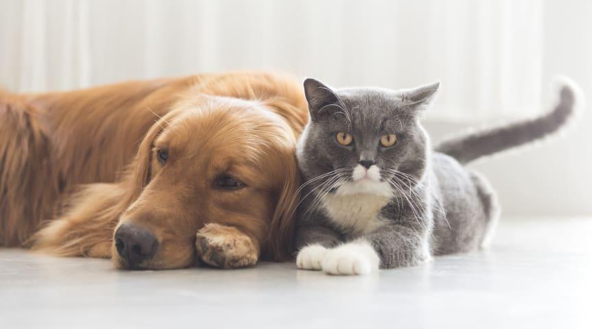 Katter mer överviktiga än hundar – 8 tips för att hjälpa ditt djur att hålla formen