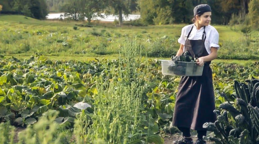 Färna-kock finalist i Årets unga kock 2020