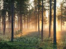 Biobensin kan tillverkas av träflis