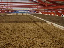 Thorsens Chipskartofler får alligevel fibernet