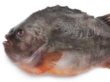 Sjurygg heter den långsamväxande fisk vars ägg vi äter som stenbitsrom, vilket inte gynnar artens återväxt.