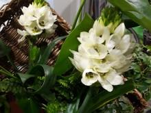 Tre undervurderte blomster til vårkrukken