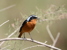 ​Birding Southern Morocco with Ramblers Worldwide Holidays
