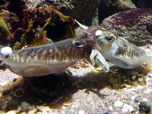 Kärlek under ytan på Havets Hus