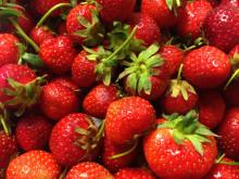 Mathias Dahlgren serverar jordgubbstårta på nationaldagen