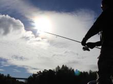 Fiske i solen