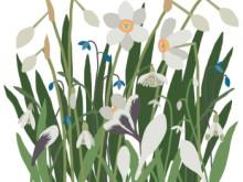 Rosendals Trädgård Ekbacken Illustration: Nadia Nörbom