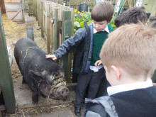 FARMYARD FRIENDS: Brimrod Primary School
