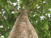 Life Forestry: EZB-Kauf von Unternehmensanleihen schadet Sparern