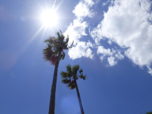 ​Here comes the sun… LLA's recommendations for a stress-free start to the holidays