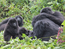 Walk on the Wildside Through Uganda and Rwanda