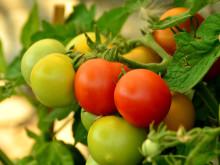 Ramböll deltar i storskalig satsning på cirkulär odling för hållbar matproduktion