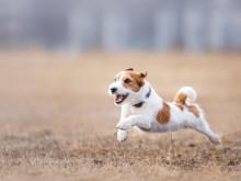 Doggy satsar stort på landets aktiva hundar