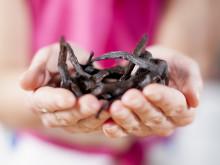 Vanilj i fokus i Smaka på världen - ett unikt och kryddstarkt samarbete för integration