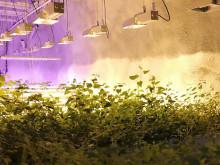 Pyhäsalmen kaivos saa asemakaavan ja samalla uuden elämän Pyhäjärven Calliona