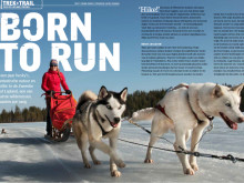 Gold of Laplands nyhetsbrev 10 december