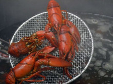 Crayfish supper with respect for tradition