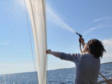 Invasiv vattenloppa kan förändra ekosystem i Bottenviken