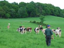 KRAV vill att regeringen stoppar EUs förslag om ny ekolag