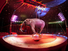 For love not money – what keeps circuses on the road?