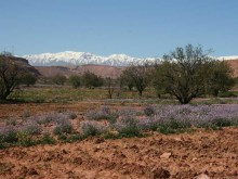 Birding in southern Morocco – a new experience