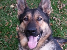 Police dog punched during arrest, Hayes