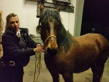 PC Emma Hooper with one of the rescued horses