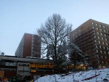 Kringsjå Studentby med Bygg B massivtre