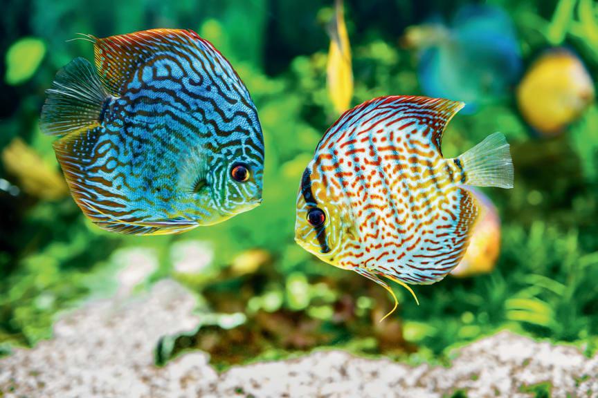 Farbenfrohe Unterwasserwelt im Aquarium