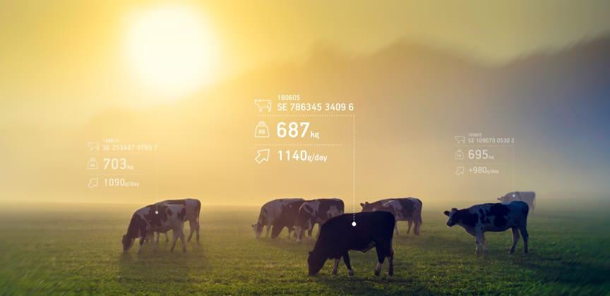Hencol digitaliserar lantbruket