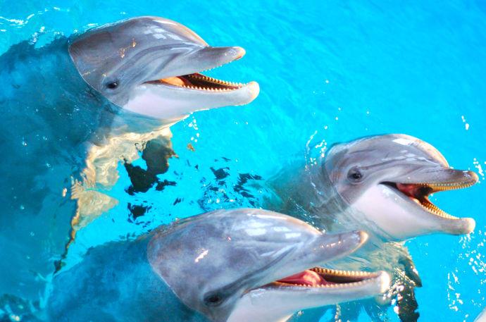 kolmården förboka delfin