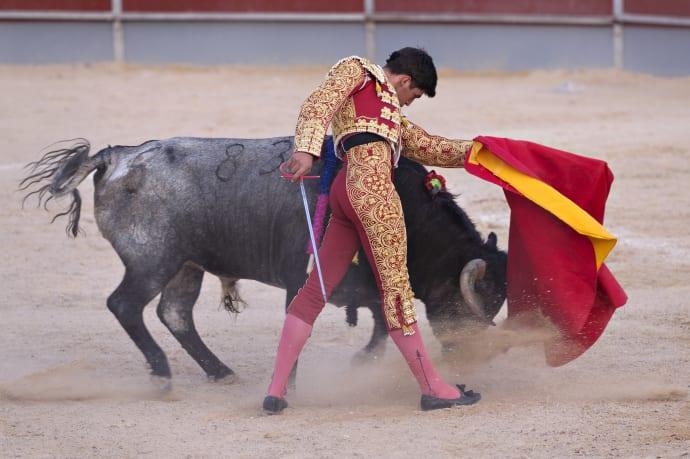 Tjurfäktning spanien 2016