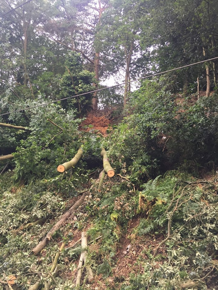 Cross City line south reopens after tree removal and embankment