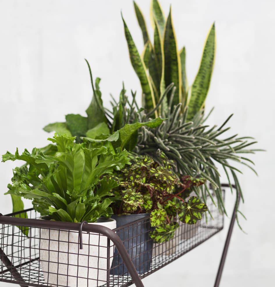 gröna växter luftrenare