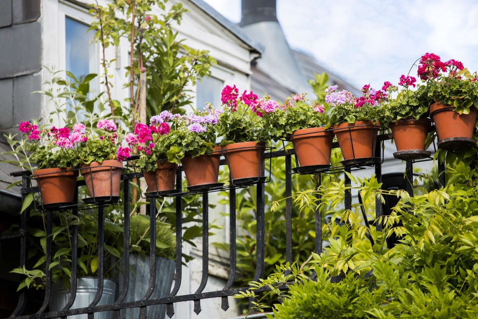 växter på balkong