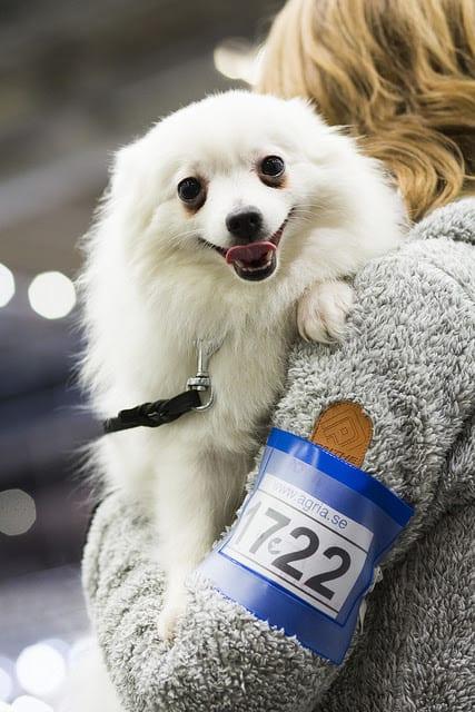 svenska mässan göteborg hund