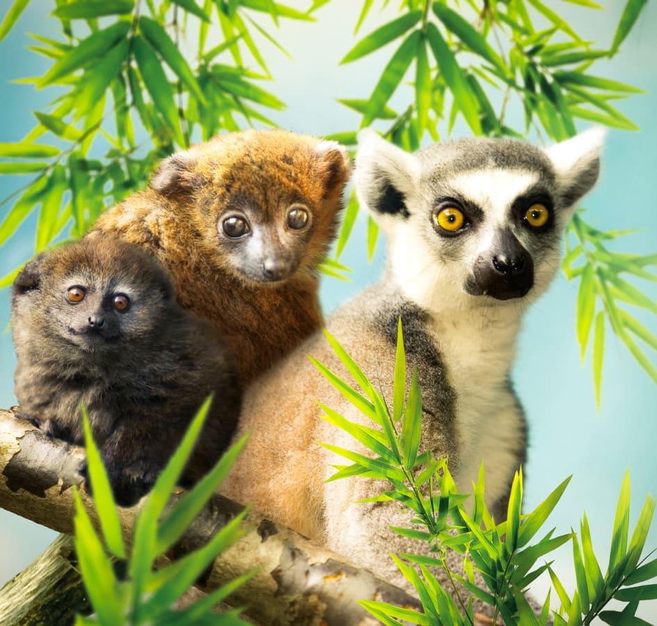 Den 5 maj är det dags för Parken Zoo att slå upp portarna för säsongen.  Årets största nyhet är Lemurernas Värld. En unik upplevelse där närheten  till djuren ... 48216a95abc6f