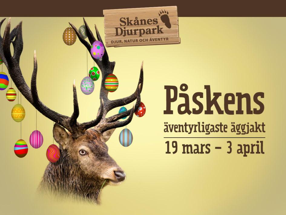 På lördag den 19 mars öppnar Skånes Djurpark igen för en säsong som inte  kommer likna någon annan i djurparkens historia. Under två veckor kommer  det att ... 62d603b2e9911
