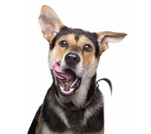 Dyr vard for oforsakrat husdjur