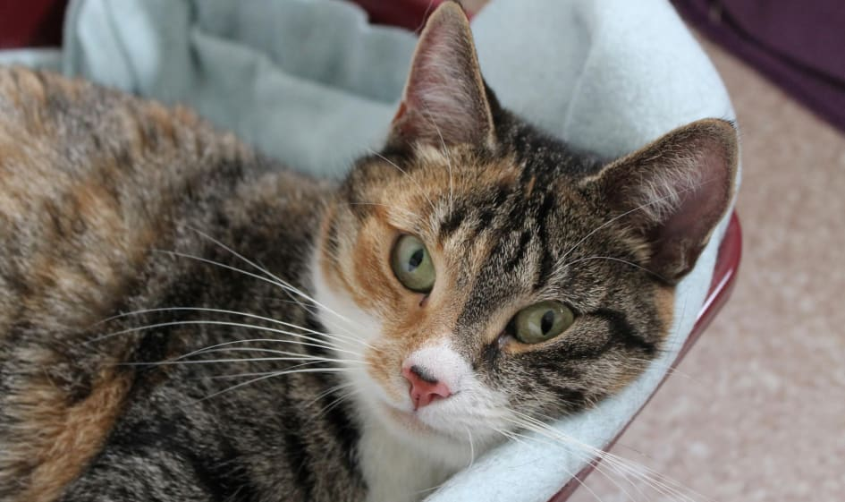 Samhallet ska skydda overgivna katter