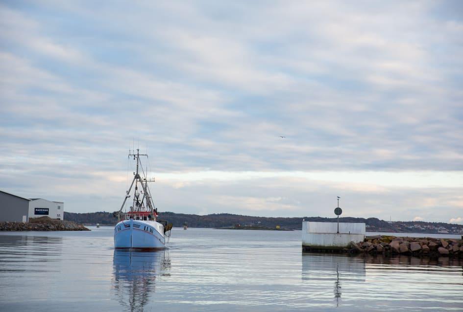 Stopp for torskfiske i skagerrak