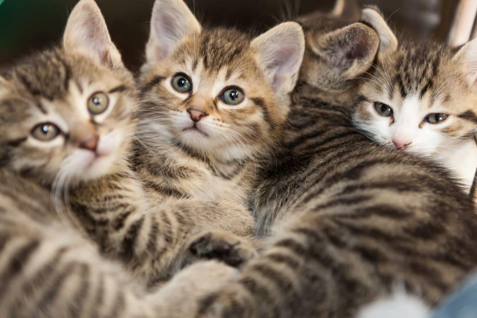 Ny lag nu maste katter kastreras