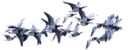 Är det en riktig fågel! Lever den? – Pedagogisk ringmärkning i Stockholm