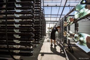 Algbönder köper energieffektiv pärlkvarn från Christian Berner