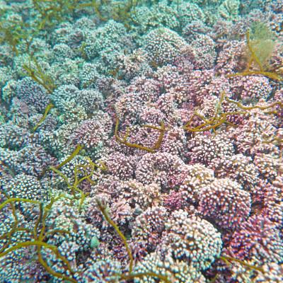 Ruglbunn til begjær: Ønsker høsting av sjelden og sårbar marin naturtype