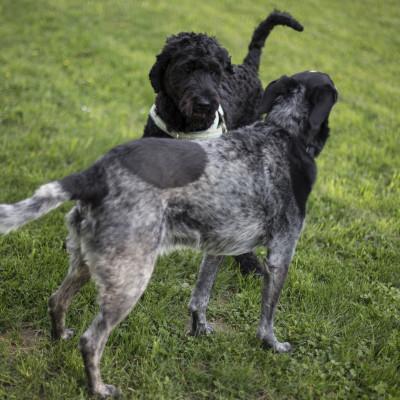 Nu får hundar egen lekplats i Gräfsnäs